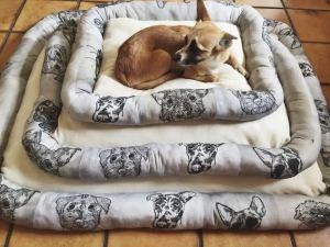 ", True ""Puppy Power!"" Fashion & Pet Accessories Designer Hyla Frank Makes Magic!"